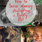 How to save money adopting a family pet. 3 options that are cheaper than a pet store.